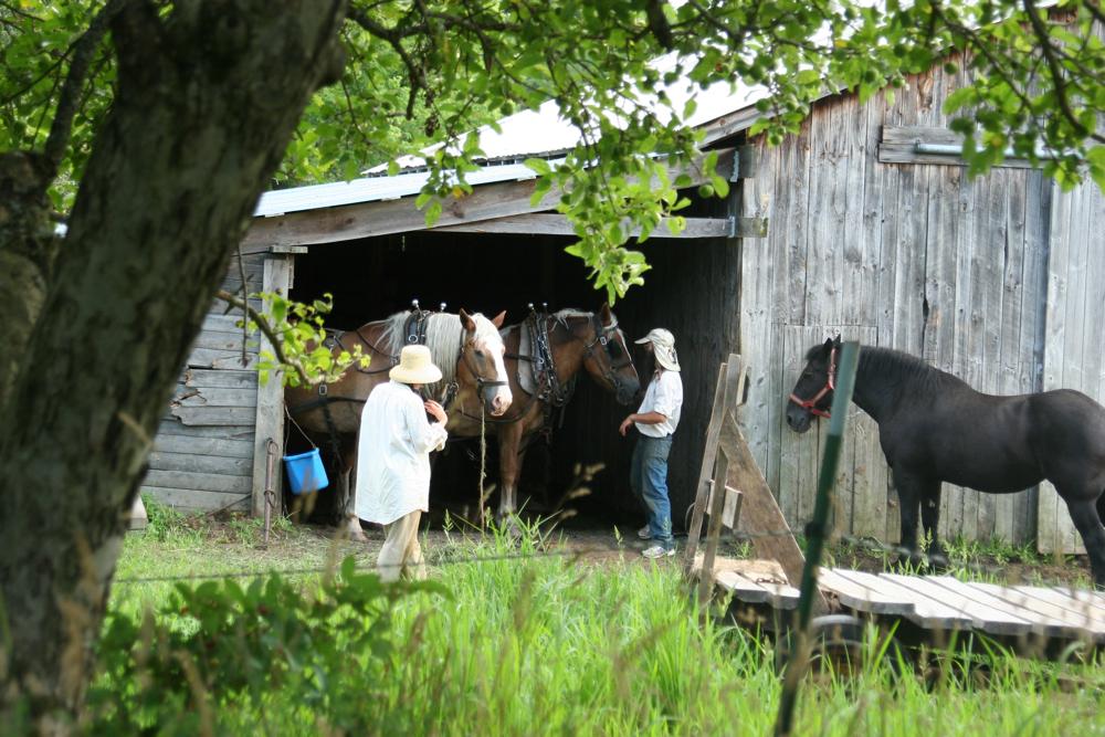 k, f horses, barn.jpg