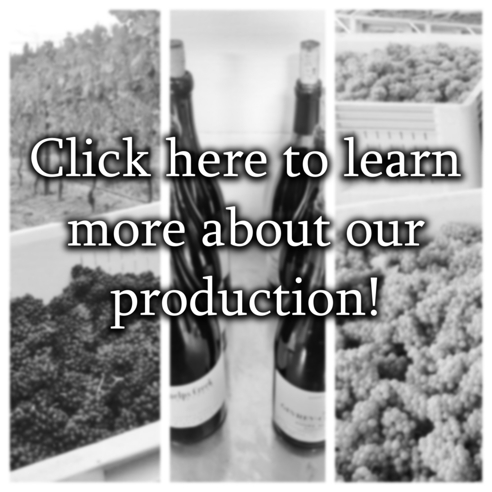 wine production photo.png