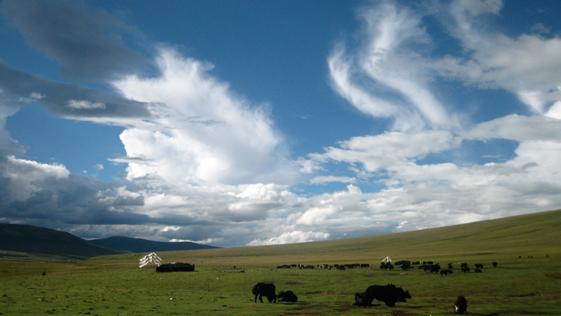 Gyamtod summer pasture