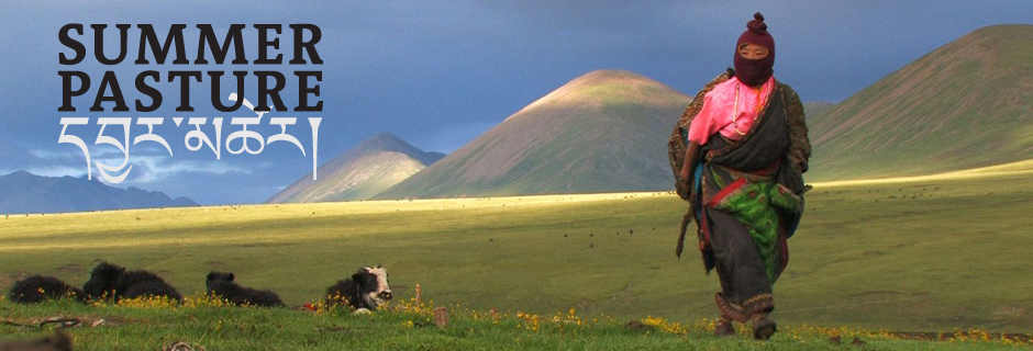 Summer Pasture Film