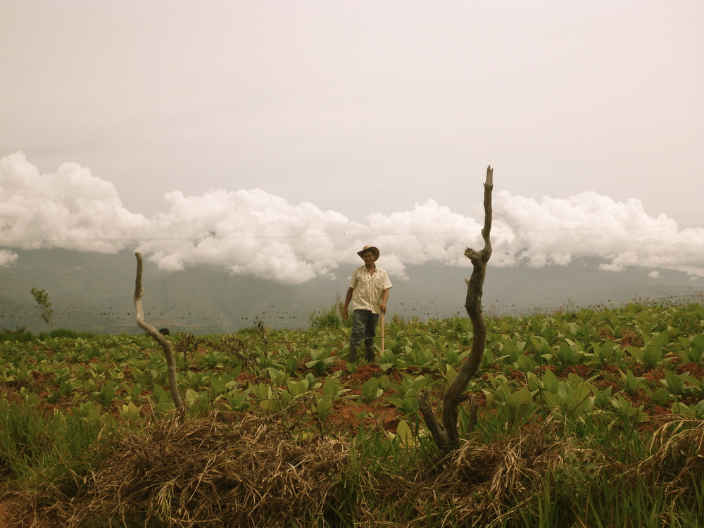 my favorite picture ever taken with this cam: a tobacco farmer near san gil, colombia