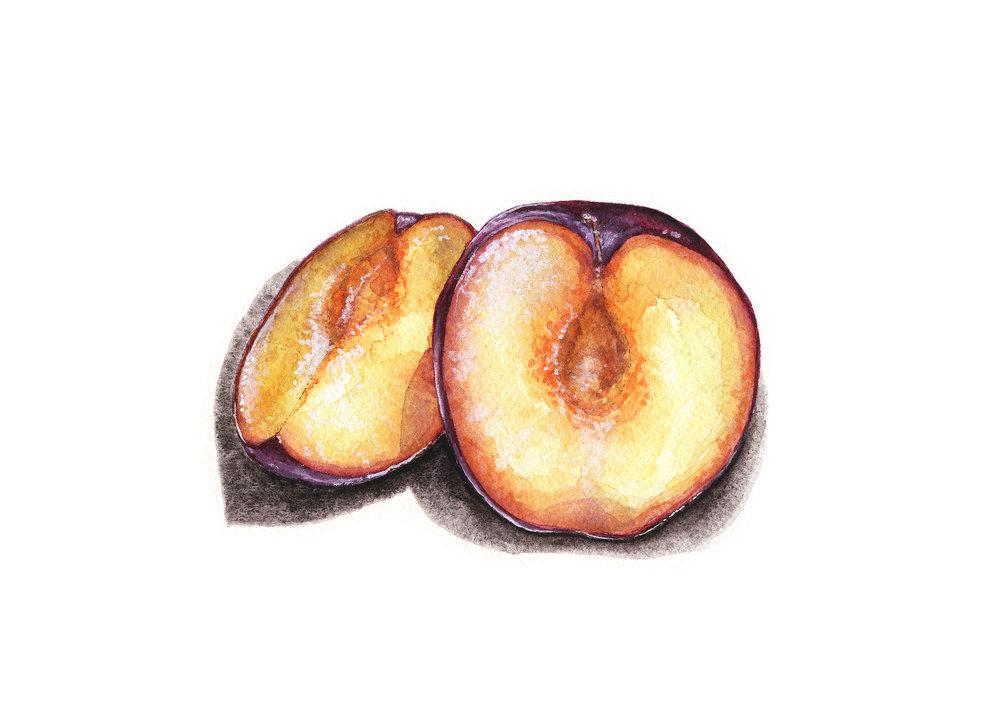 plum bbs.jpg
