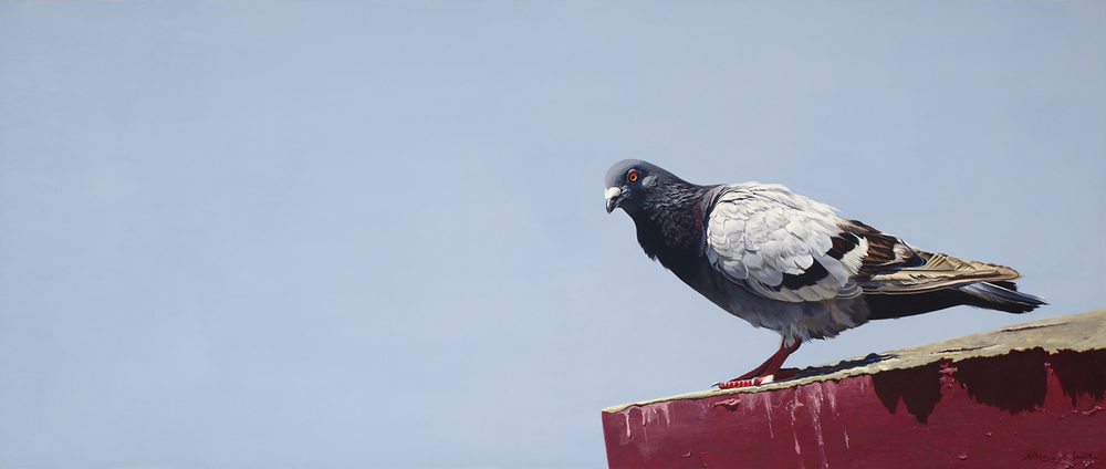 SMIDGEON OF PIGEON | OIL ON BOARD | 35X17