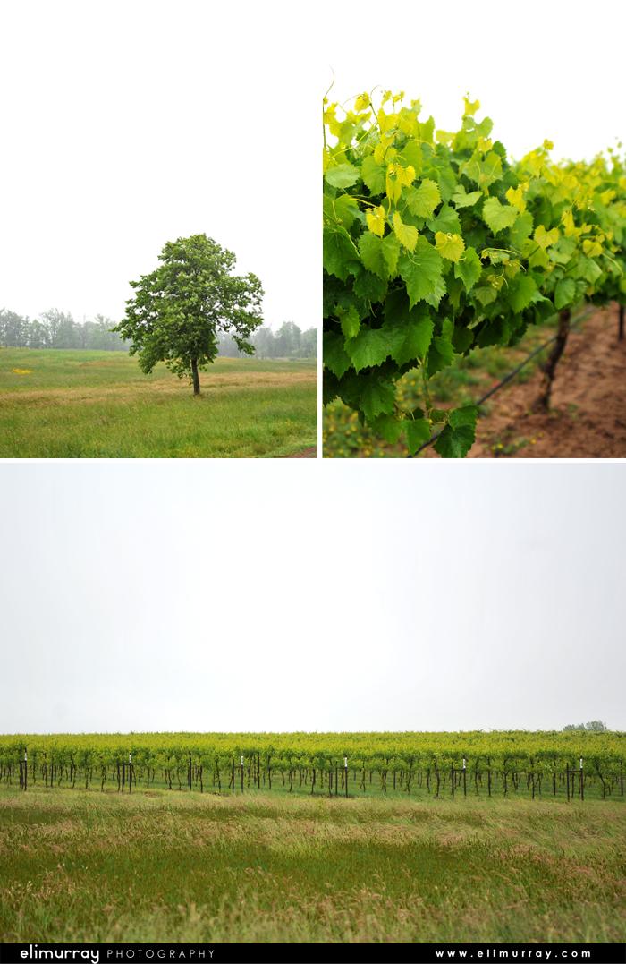 Altus Arkansas Vineyards
