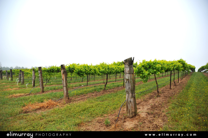 Arkansas Vineyards