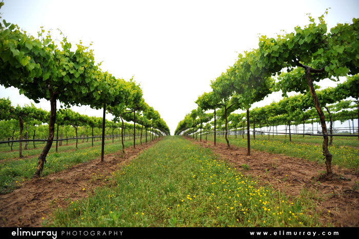 Altus, Arkansas Wine Vineyards