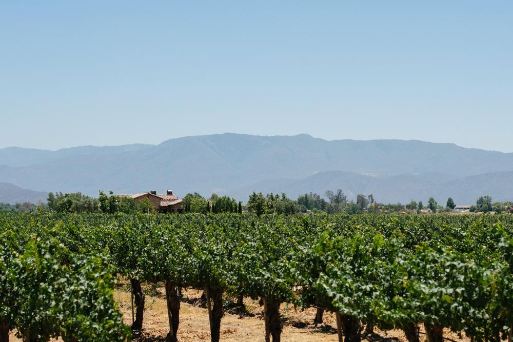 ponte winery vineyard