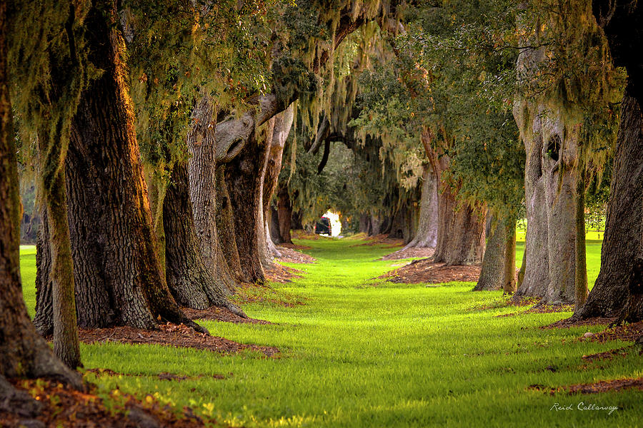 the-avenue-of-oaks-4-st-simons-island-ga-reid-callaway.jpg