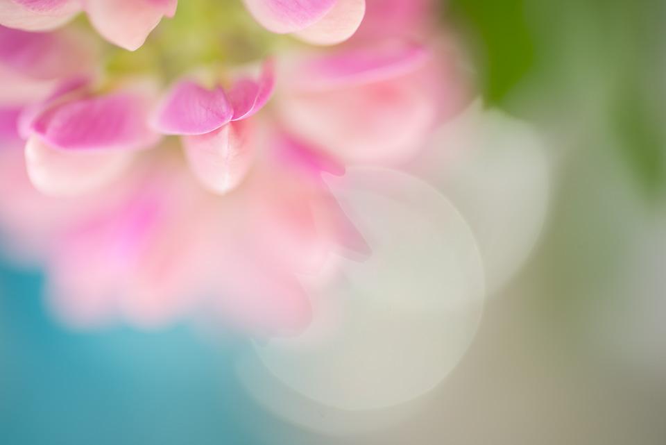 lupin_3.jpg