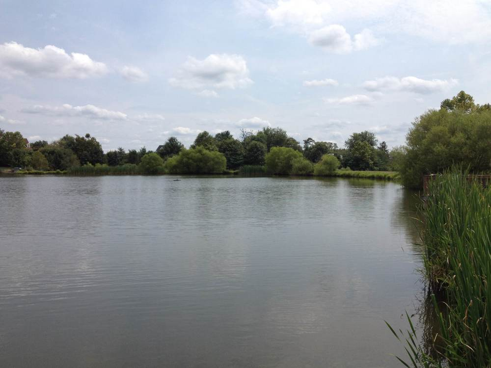 The fishing pond at Franklin Park.
