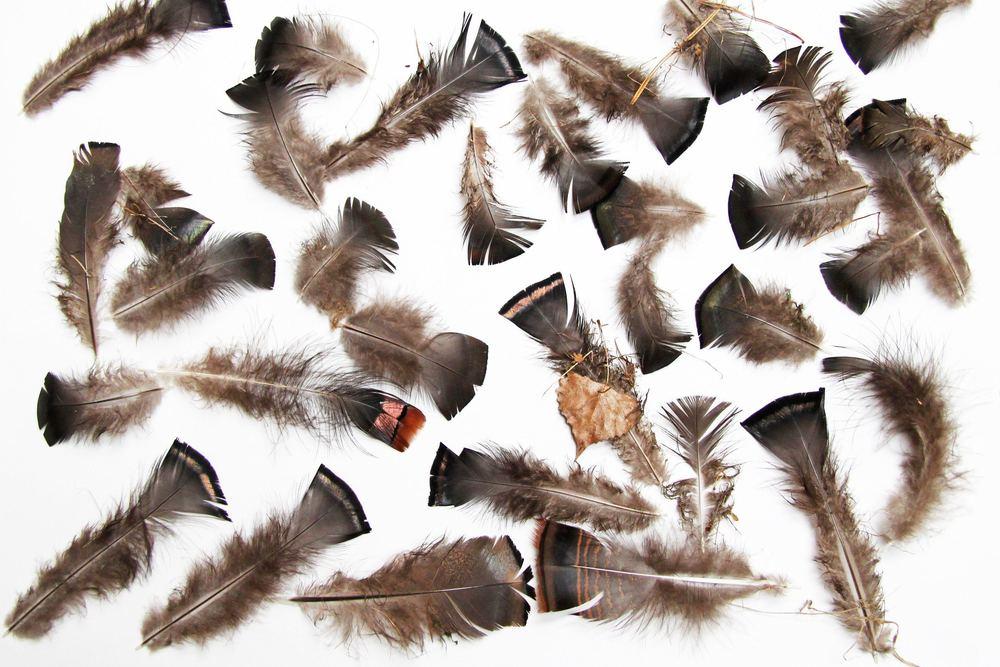 Picture from:http://stillblog.net/wild-turkey-breast-feathers