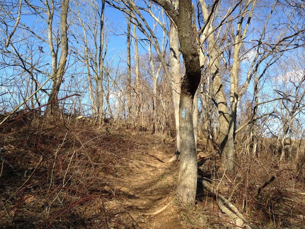 Hoyles Mill Trail