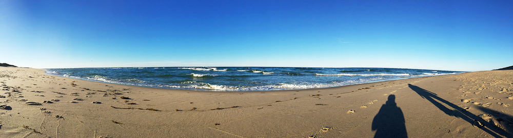// Atlantic Ocean, and some seals fishing off the shore