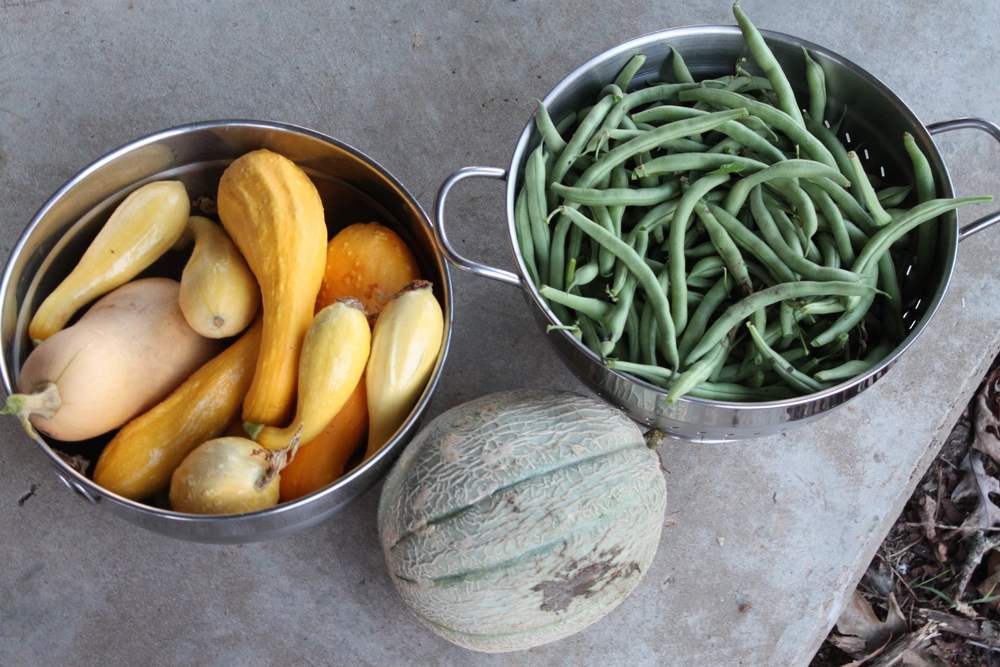 Fresh Produce From the Garden
