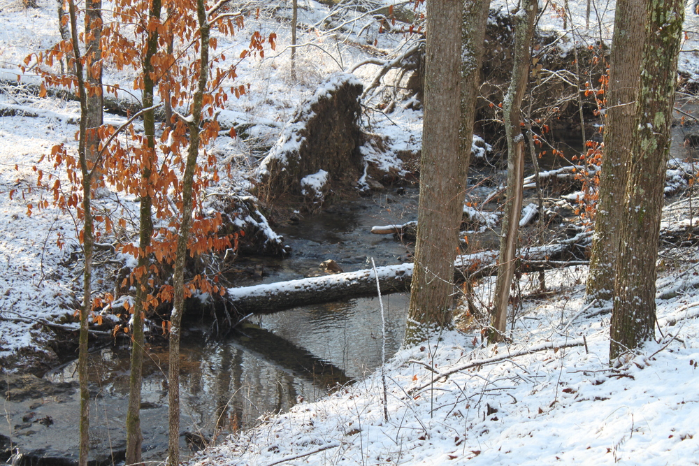 The Natchez Trace @ Jack's Branch During a Recent Snow