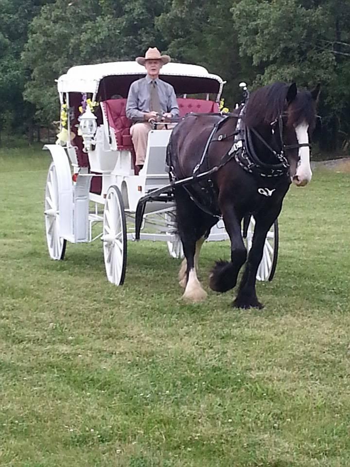The wedding carriage service at Buffalo River Farm