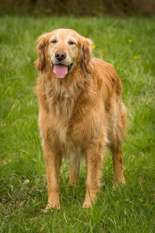dog-marley-2.jpg
