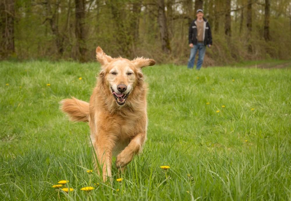 dog-marley-3.jpg
