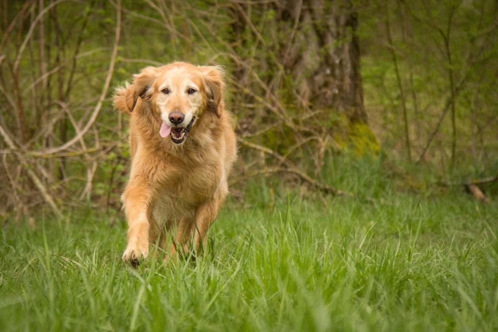 dog-marley pic.jpg