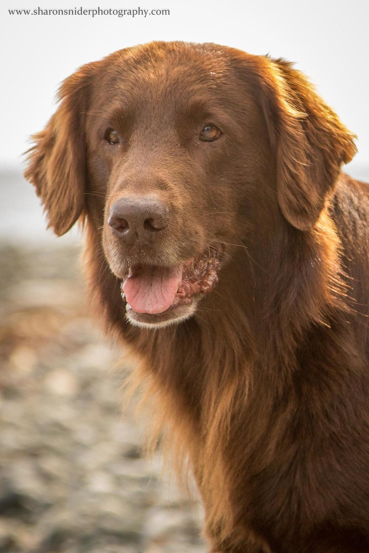 courtenay dogs-2.jpg