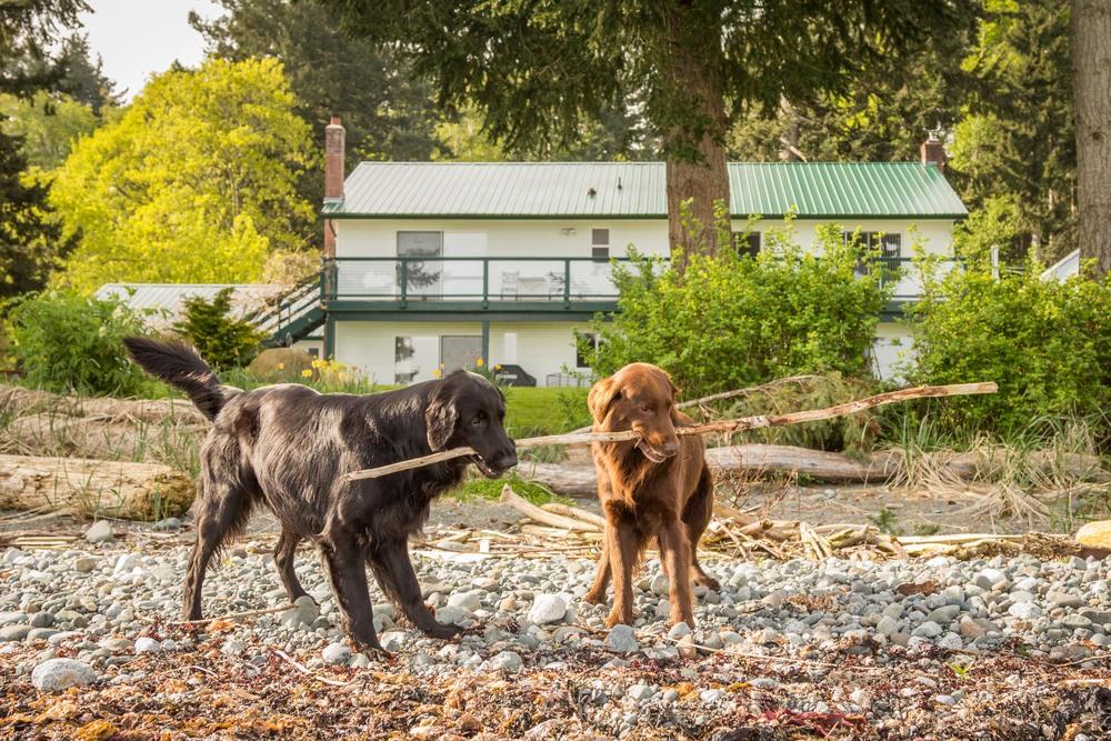 courtenay dogs-9434.jpg