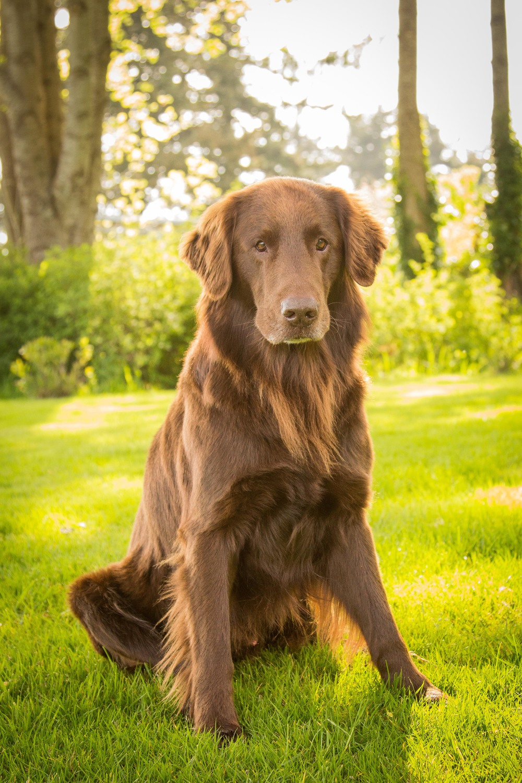 courtenay dogs-9425.jpg