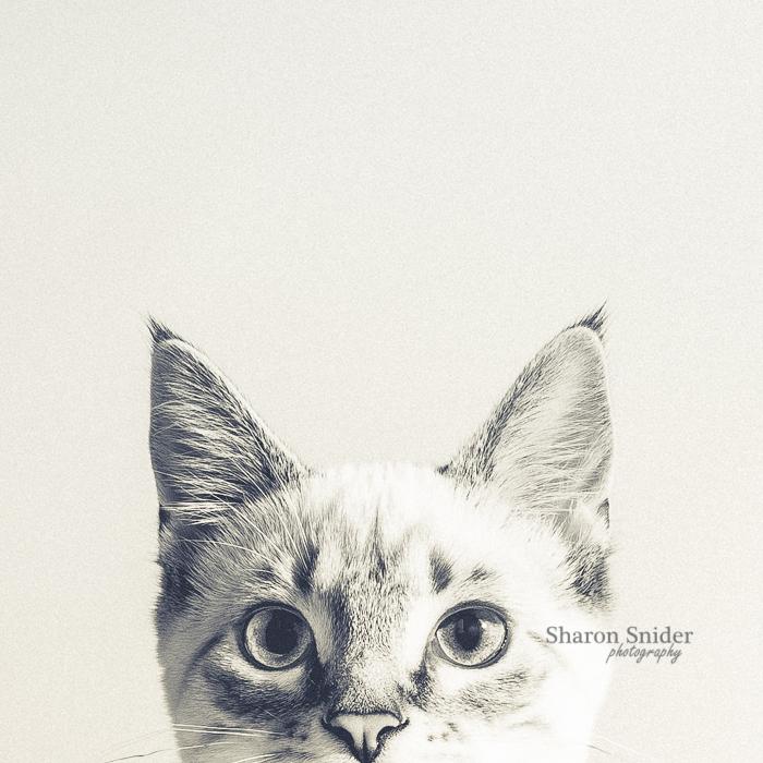 courtenay cat