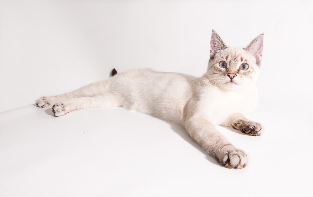 comox cat
