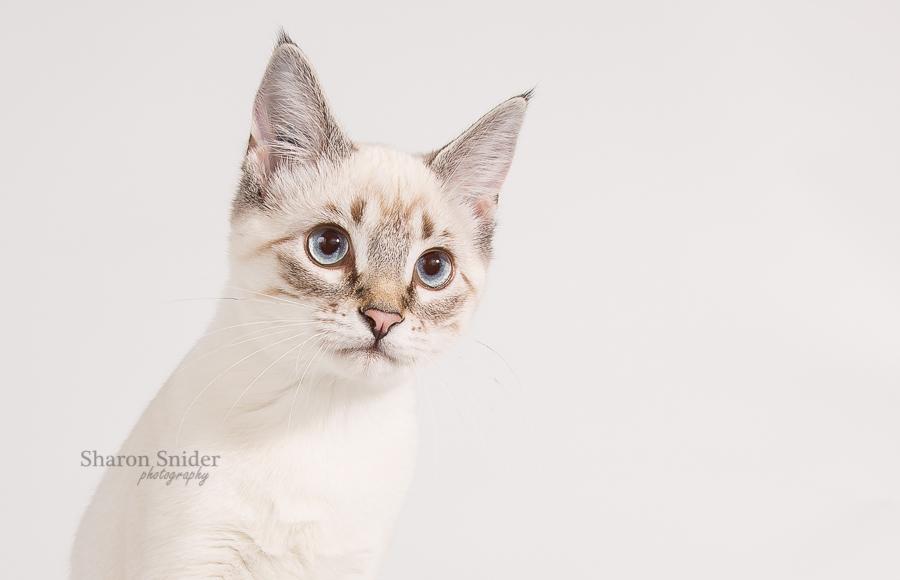 courtenay kitten