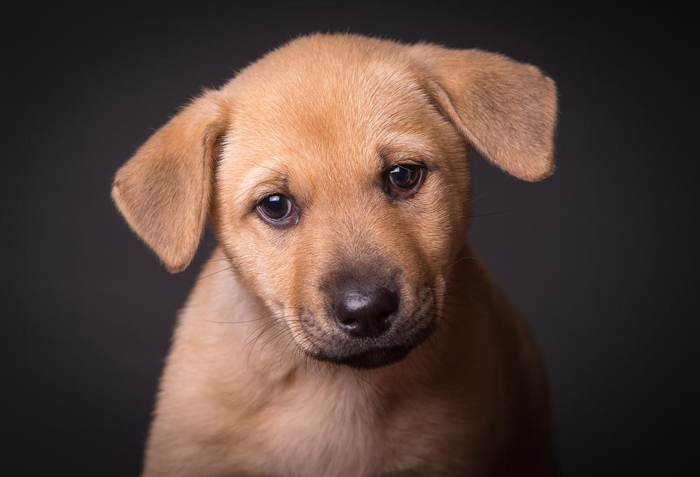 comox photography dog-6644.jpg