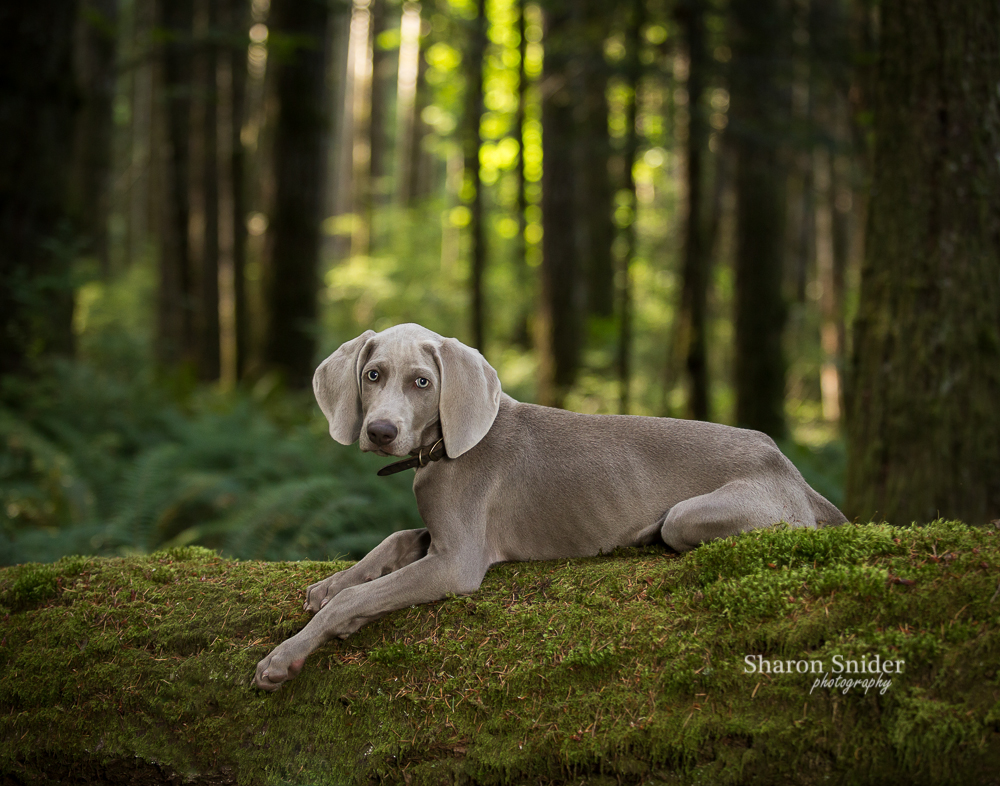 dog photography comox valley