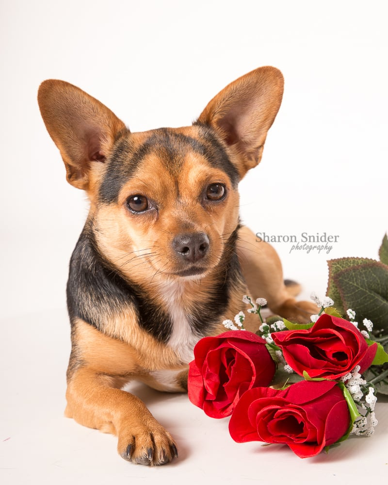 Courtenay pet photography