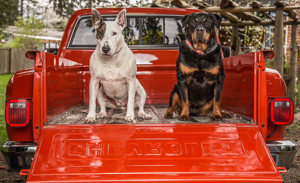 dogs in Chevy