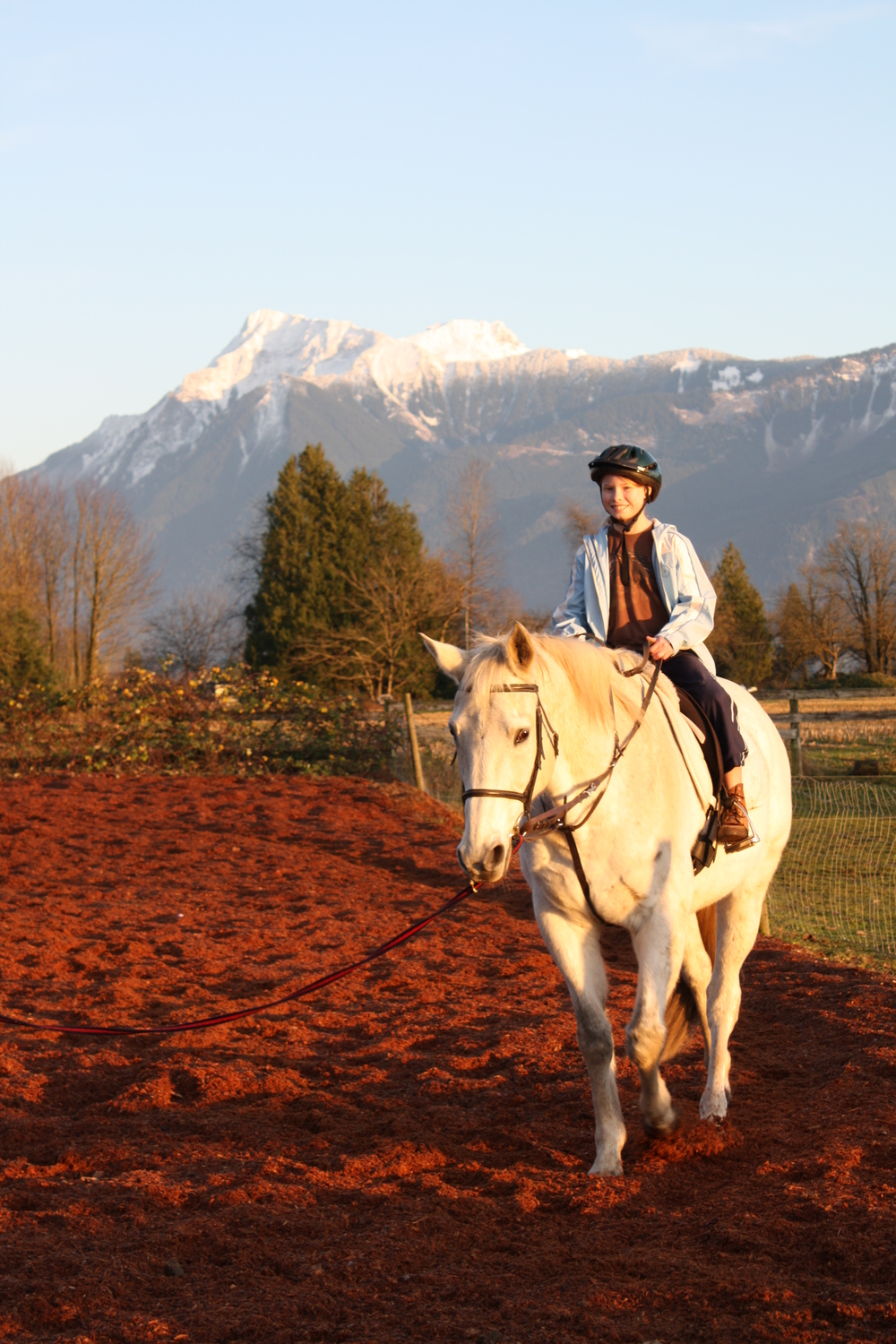 mt cheam horse photography