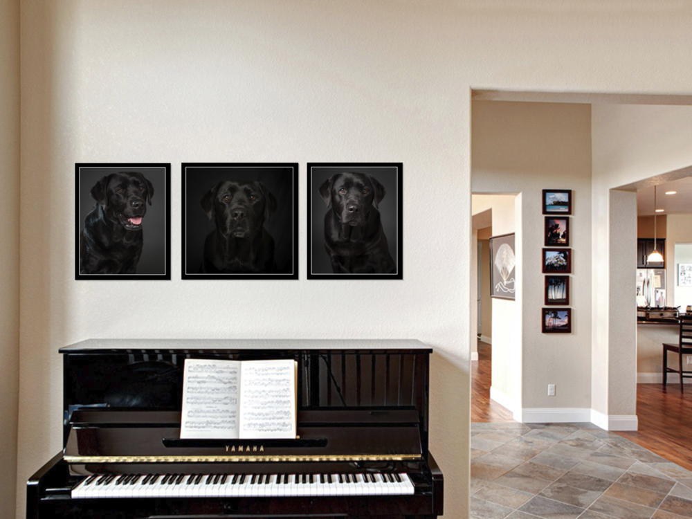 black lab wall art
