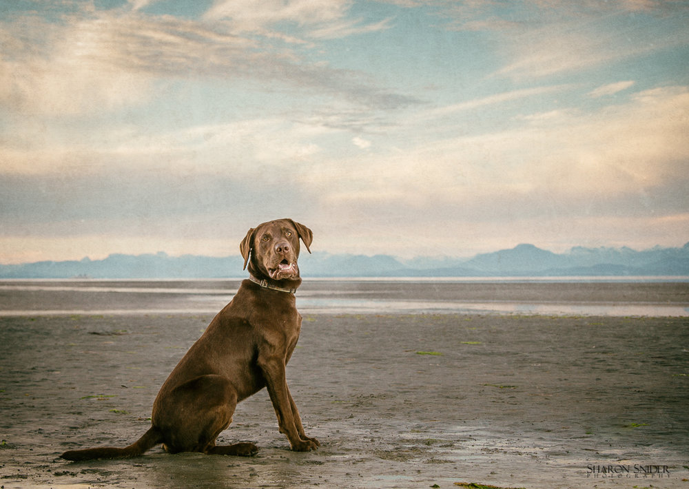 comox dog photography