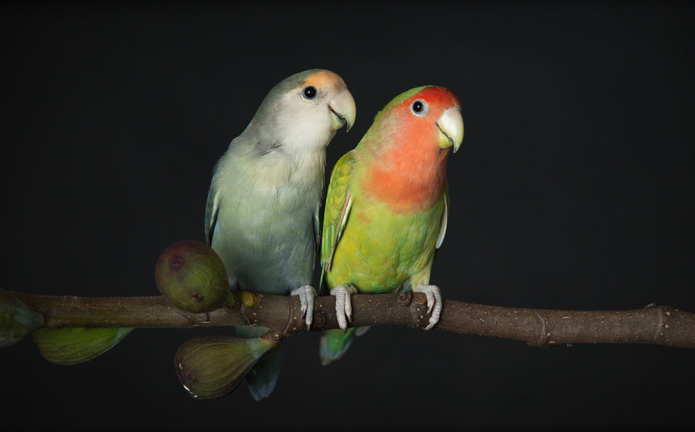 lovebirds-5489.jpg