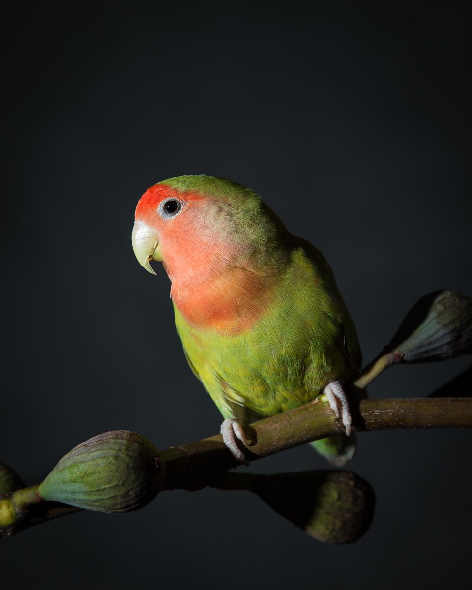 lovebirds-5506.jpg