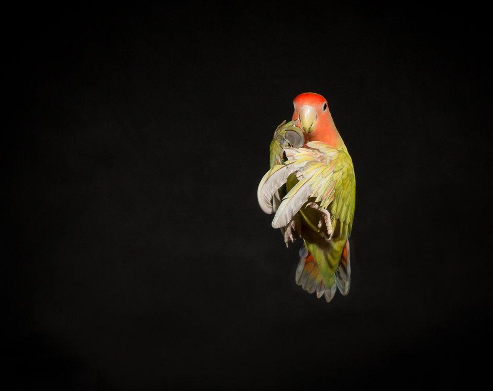 lovebirds--3.jpg