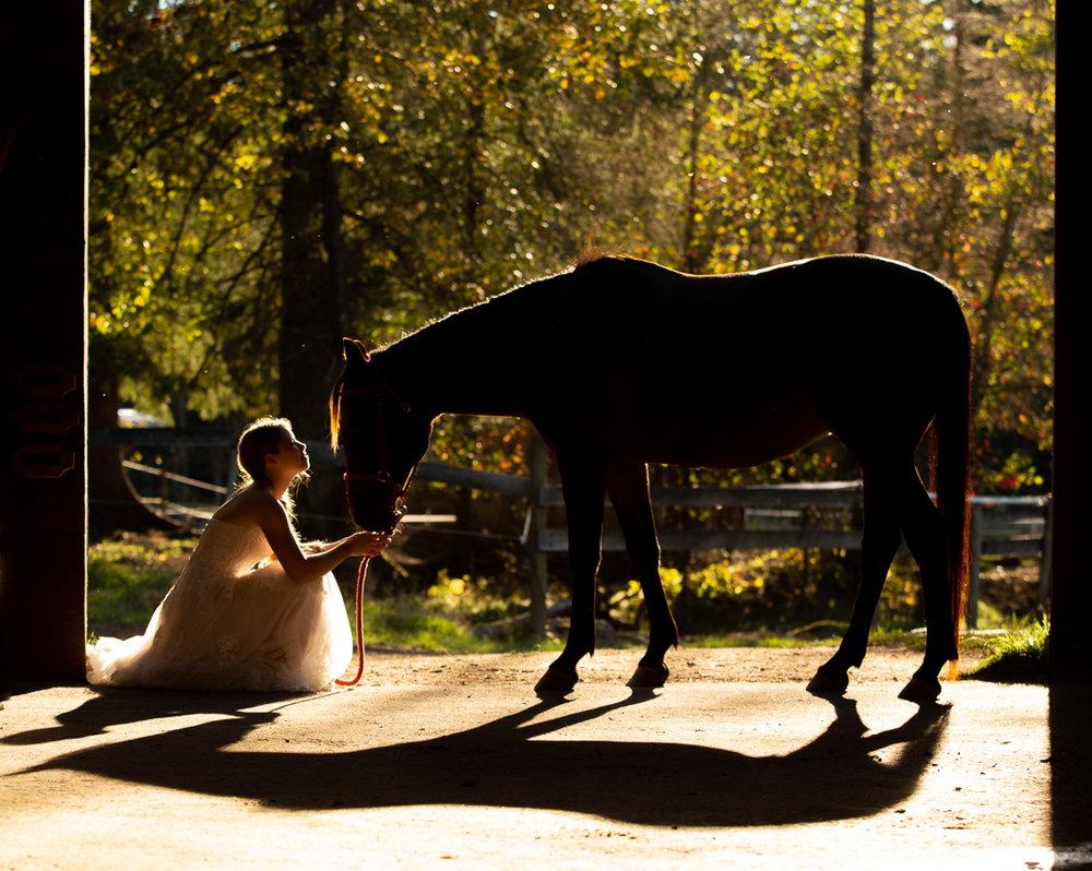 horse-1630.jpg