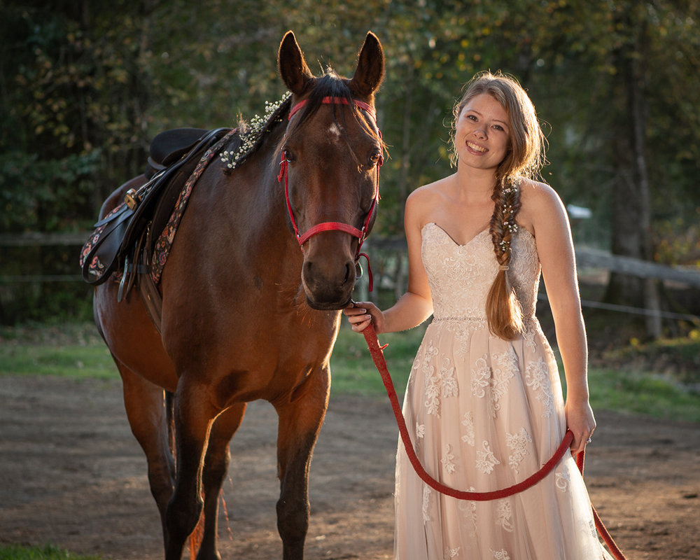 horse-1712.jpg