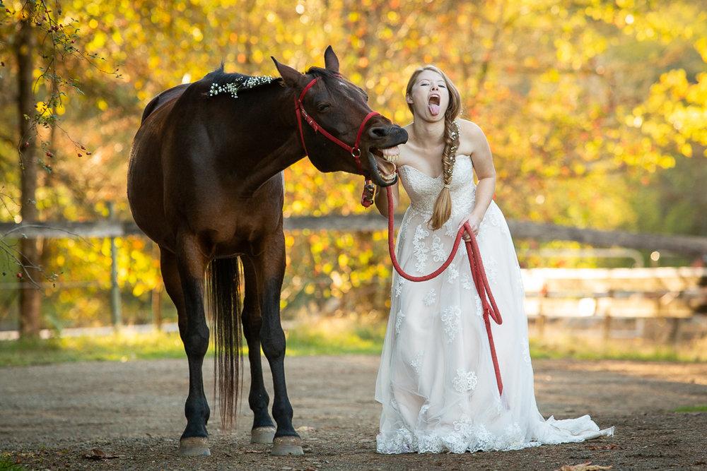 horse-1647.jpg