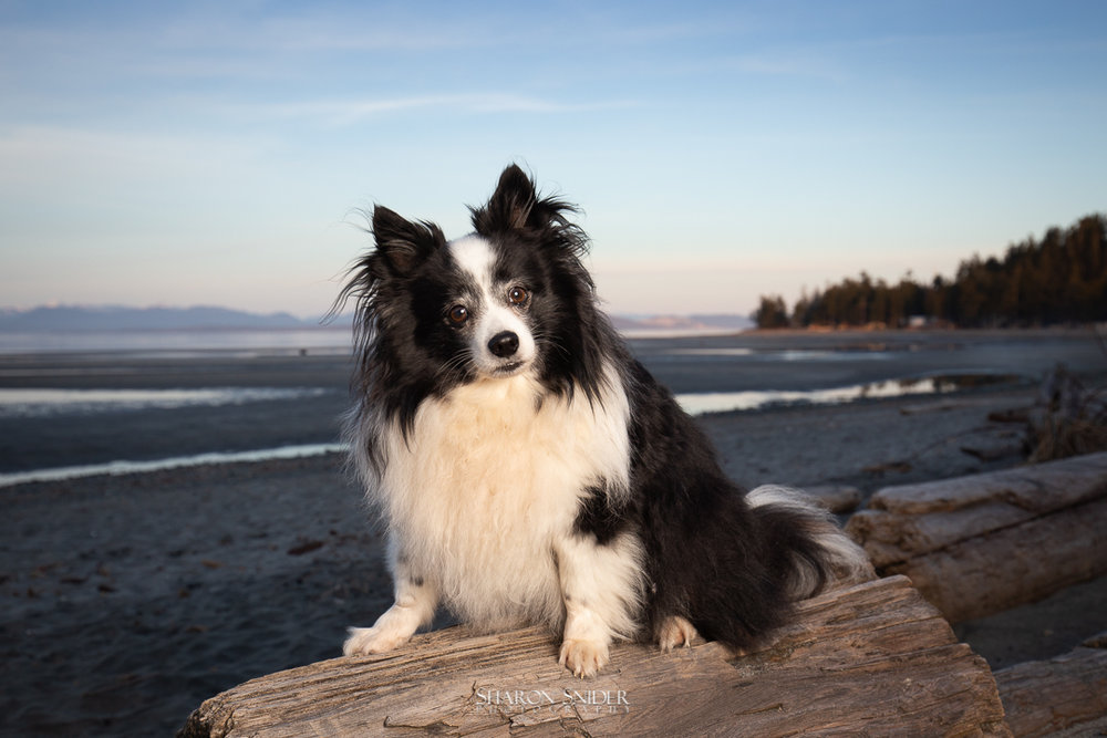 dog at Kye bay beach