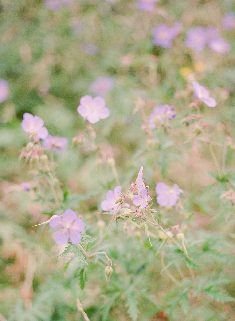 wild flowers  in london by imogen xiana fine art wedding photography