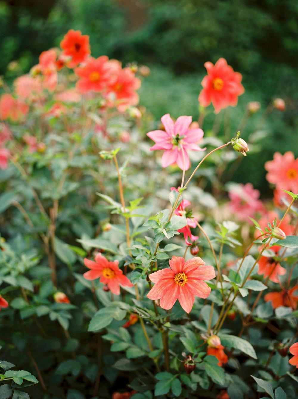 autumn flowers in dorset