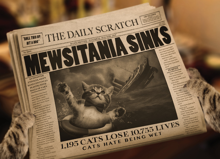 downton-tabby_newspaper.jpg