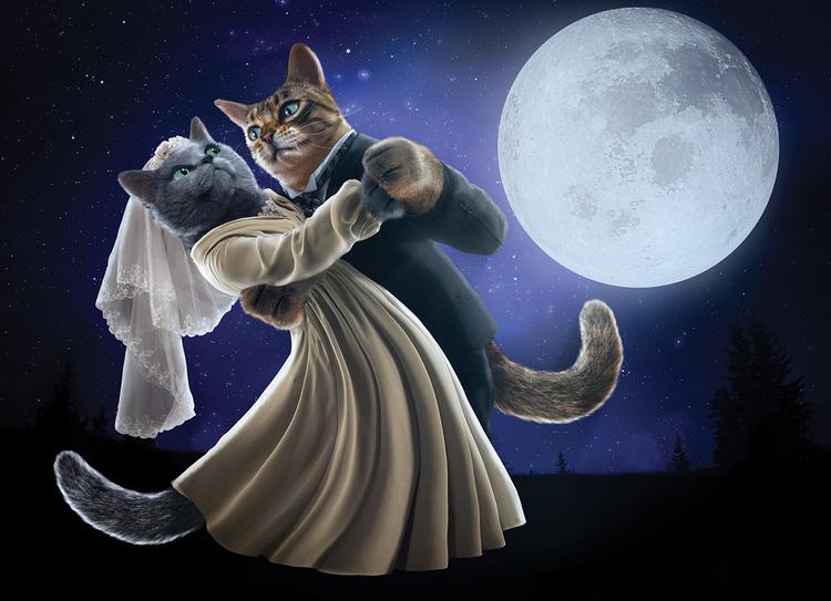 downton-tabby-catdance.jpg