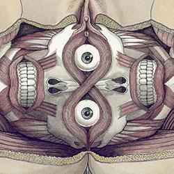 Kate Lacour    www.sharkbrains.com