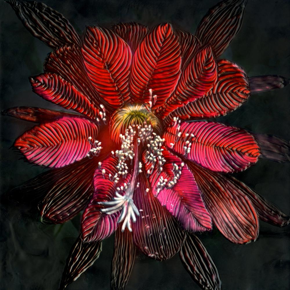 Botanical I   (NA)