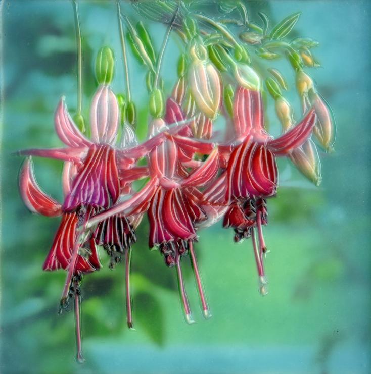 Botanical III   (NA)